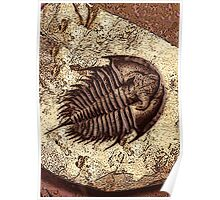 The Fossil Poster