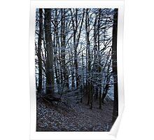 Winterwald Poster