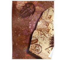 The Fossils Poster
