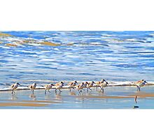 We're following the leader... Sandpipers in Goleta Beach California Photographic Print