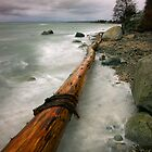 Driftwood by Ryan Watts