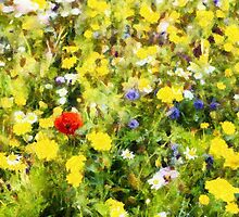 Poppy in wildflowers by Nigel R Bell