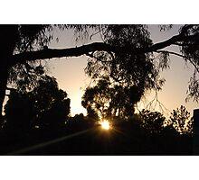Sunrise amongst the trees  Photographic Print