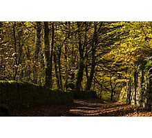 Lane at Lumsdale Falls Photographic Print