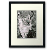 The Stray  Framed Print