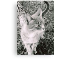 The Stray  Canvas Print