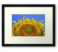 Sun Bather Framed Print