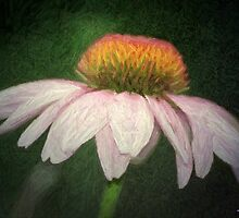 Coneflower In Colored Pencil by Julie's Camera Creations <><