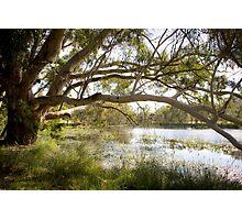 Dunkeld Community Park, Dunkeld, Victoria Photographic Print