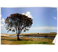 Pohutukawa Tree, Spirits bay, New Zealand Poster