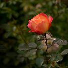 Still Young and  Beautiful by kathywaldron