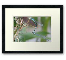 Mating Season Framed Print