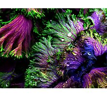 Nature's Color Photographic Print