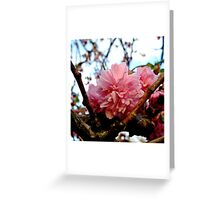 Pink Cherry Greeting Card