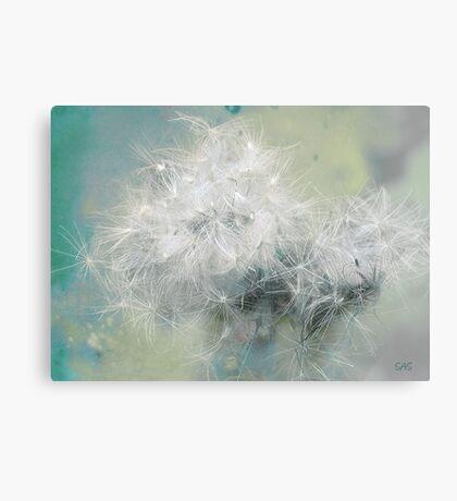 Fluffs of dandelion Canvas Print