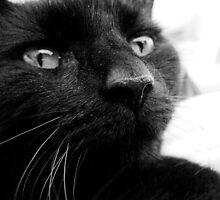 Majestic Puss by Verity Barnes