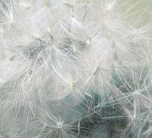 Fluffs of dandelion Sticker