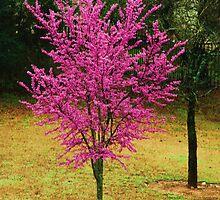 pink tree by MorganAshley