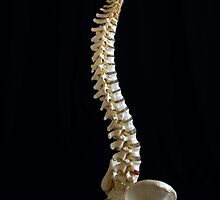 Spine by doorfrontphotos