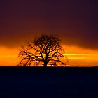 Farm Sunset Through the Big Tree by Ian Moreland