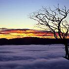Buffalo Dawn by Travis Easton