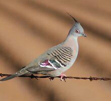 Pretty Bird on Wire by SuperGirl