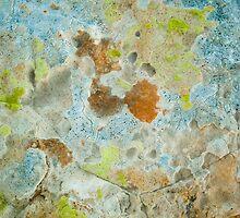 Lichen Covered Rock by Syman  Kaye