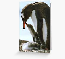 Gentoo Penguin and Chicks Greeting Card