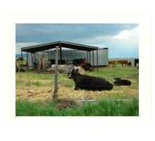 Cows in Pasture Art Print