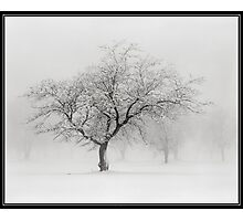 The Sound of Snow Photographic Print