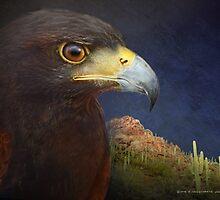 harris hawk portrait with saguaro mountain by R Christopher  Vest