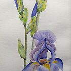 My beautiful irises by Faye Doherty