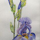 My beautiful irises by Faye Doherty