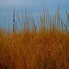 Dune Grass in Winter by Sharon Ulrich