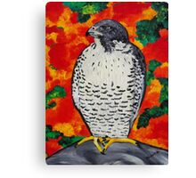 White Falcon Canvas Print