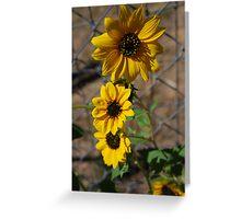 Sun Flower Patch Greeting Card