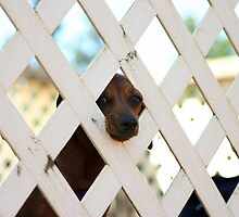 Don't Fence Me In by Keeli