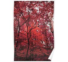 Pink Forest Poster