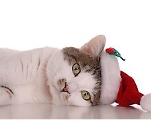 Santa Cat Photographic Print