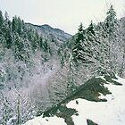 WINTER,NEWFOUND GAP by Chuck Wickham