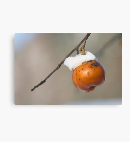 Winter Fruit Canvas Print