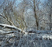 Snowy wood by kenwalters