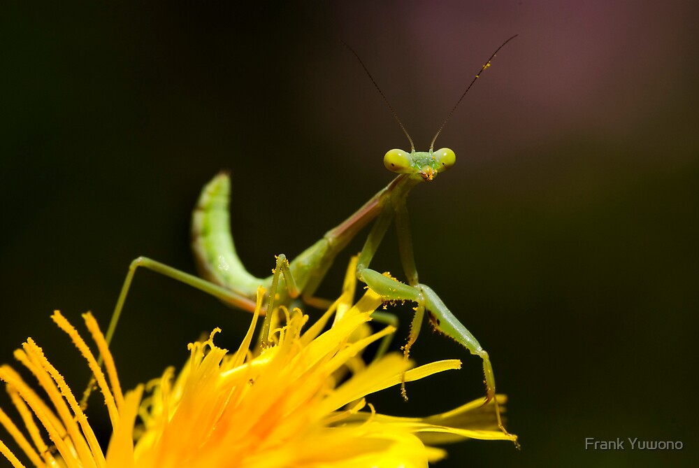 Green on Yellow by Frank Yuwono
