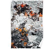 Orange and Grey Lichen #1 Poster