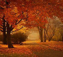 fall mist by pzhbob