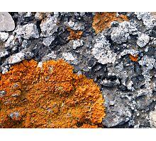 Orange and Grey Lichen #2 Photographic Print