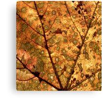 Orange Leaf Canvas Print