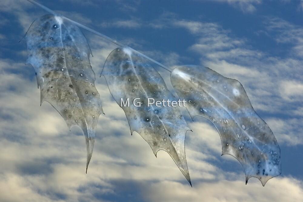 Reverie by M G  Pettett