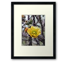 Yellow Staghorn Cactus Blossom Framed Print