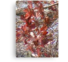 red not dead Canvas Print